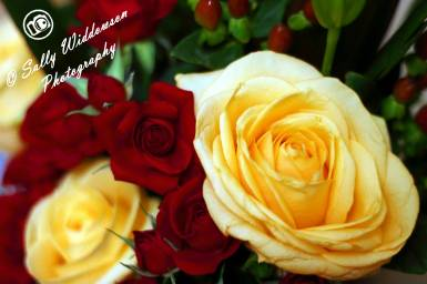 Miniature red roses large cream ivory rose bouquet red berries